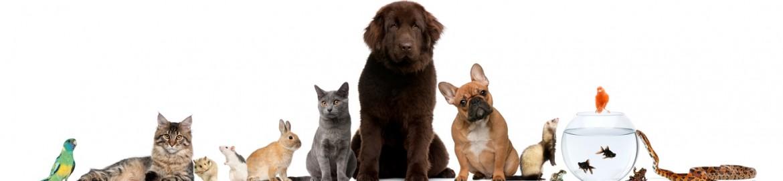 Tierversicherung365.de
